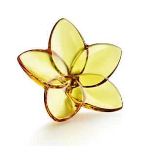 Fiore Ambra