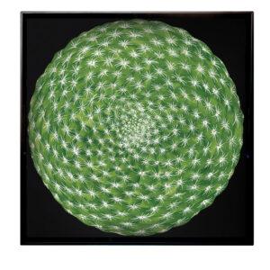 Vassoio Cactus